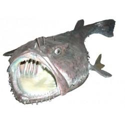 Zeeduivel zonder kop